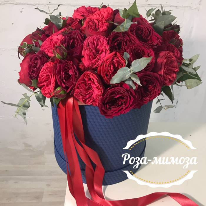 51 красная пионовидная роза в коробке с лентами R75