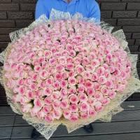 301 розовых роз в букете R922